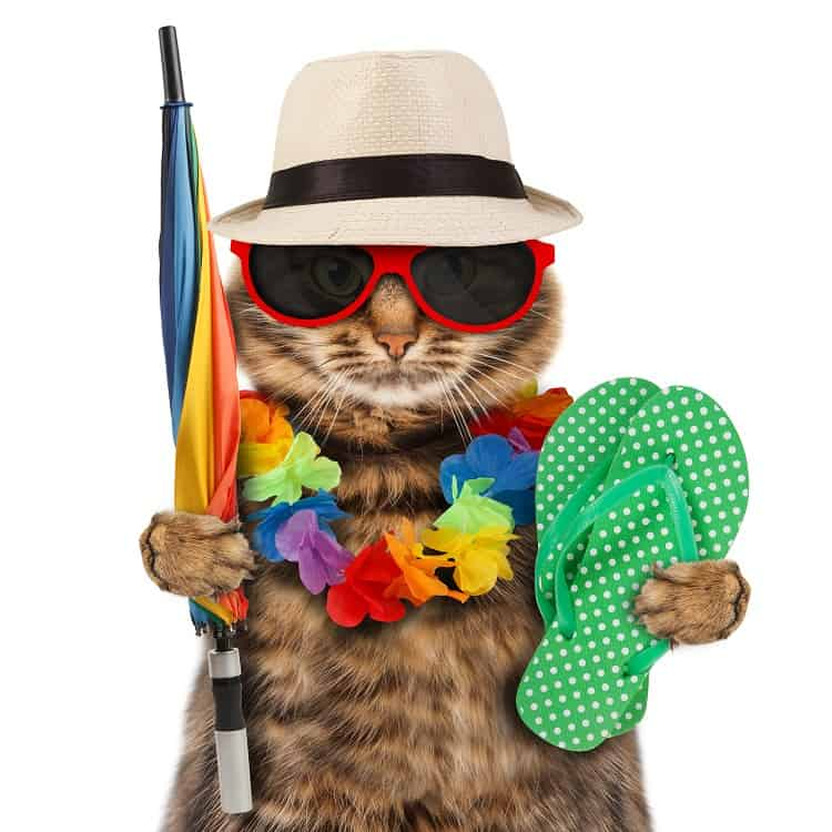 Cats On Vacation?