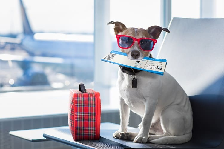 Dogs On Vacation?