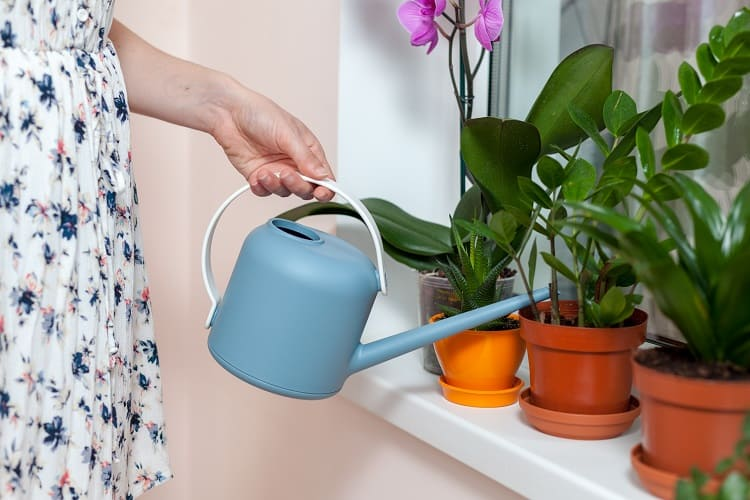 Prepare Your Home For An Extended Vacation - Housesitter Watering Plants